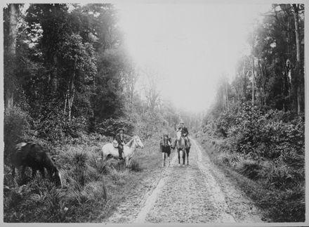 On Road through Totara Reserve