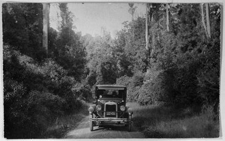 Automobile on Road through Totara Reserve