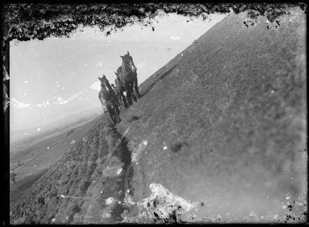 Team of Horses Ploughing Field