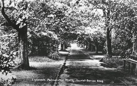 Tree-lined Walkway, Victoria Esplanade