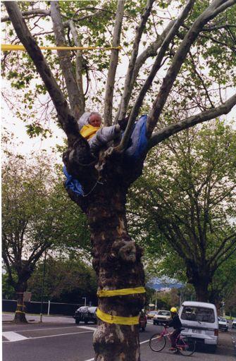 Avenue Action protestor in tree