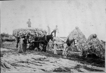 Loading dried flax fibre onto cart