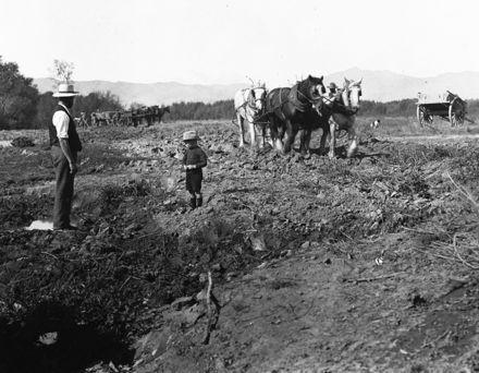 Jos Batchelar and son, ploughing at 'Willowbank' farm