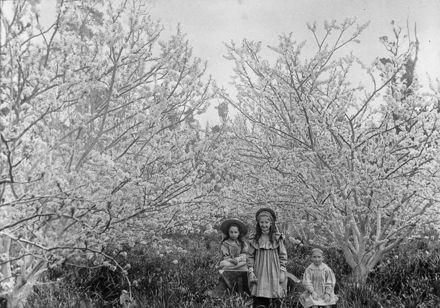 Three Monro children in orchard at 'Craiglockhart'