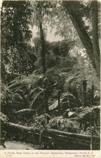 View of Ferns, Victoria Esplanade