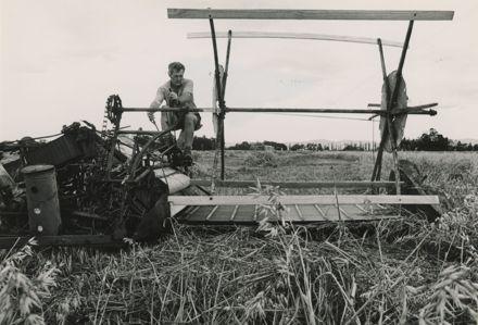 David Ford operating a 'McCormick Deering' reaper and binder