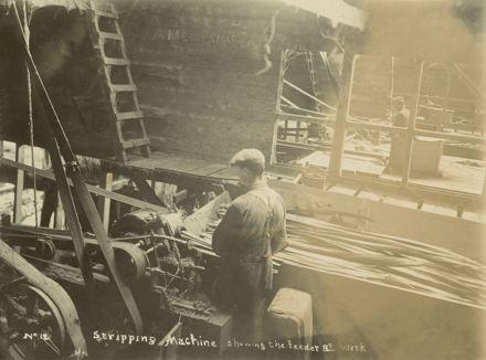 Stripping machine at work, Miranui Flaxmill, near Shannon