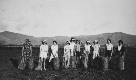Women's Service League bagging potatoes, Opiki