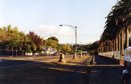 Avenue Action - tree stumps