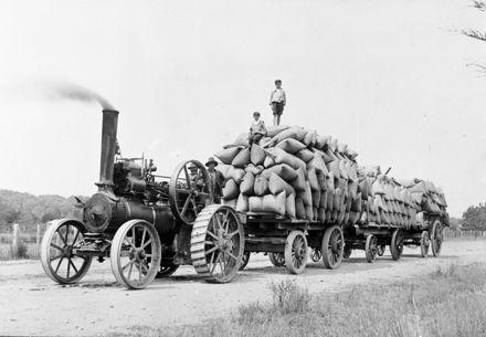 A traction engine hauling three wagon loads of grain