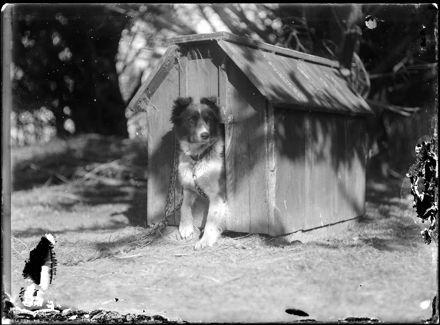 Dog in Dog House