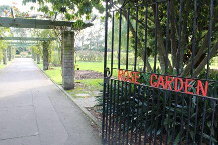 The Rose Garden in June