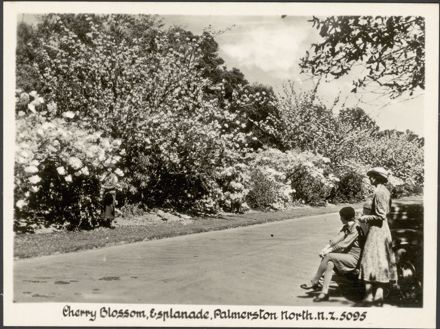 """""""Real Photographs For Your Snapshot Album - Souvenir of Palmerston North, New Zealand"""" 8"""