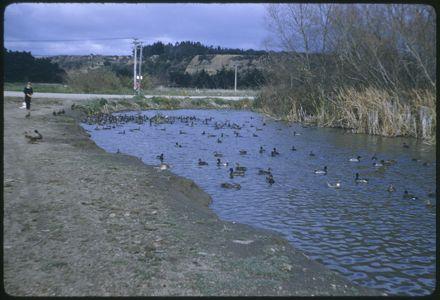 Scene near Manawatū River