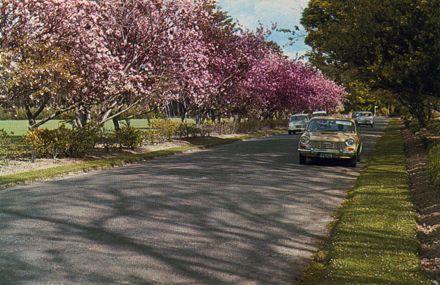 Cherry Trees, Victoria Esplanade