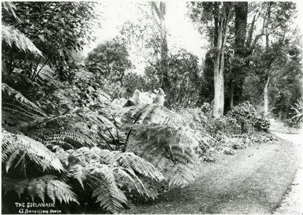 Victoria Esplanade - Path and Bush