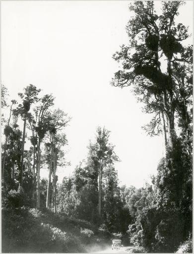 Totara Reserve, Pohangina Valley