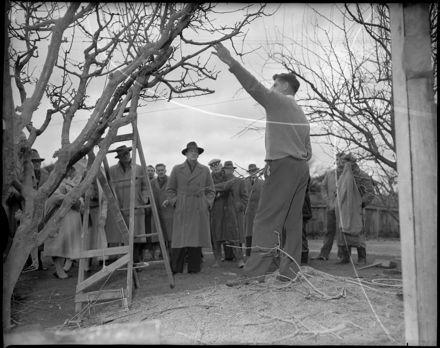 """Demonstration in Pruning"""