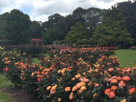 Rose Garden at Victoria Esplanade