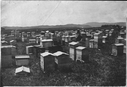 Hobbs brothers' apiary