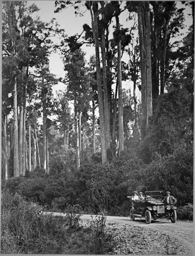Driving through Totara Reserve, Pohangina