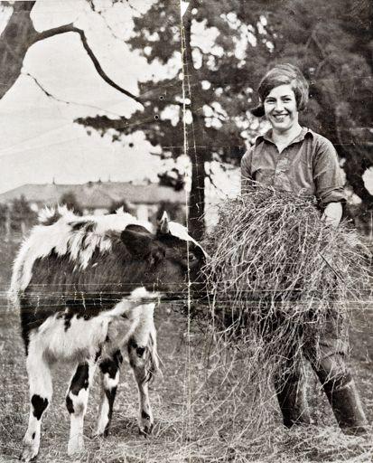 Woman feeding a cow