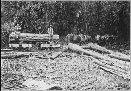 Transporting a Log by Tram Through the Bush at Waituna West