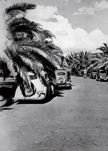 Phoenix Palms, Victoria Esplanade