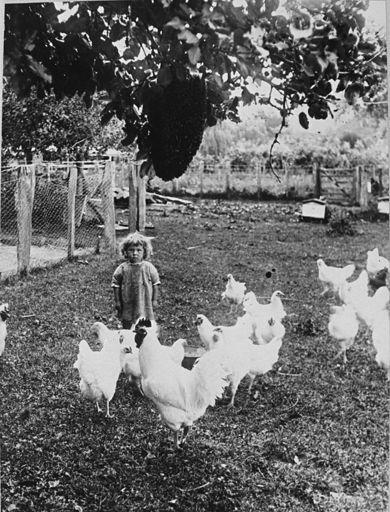 Wildbore child feeding fowls in Pohangina