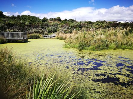 Pit Park Pond