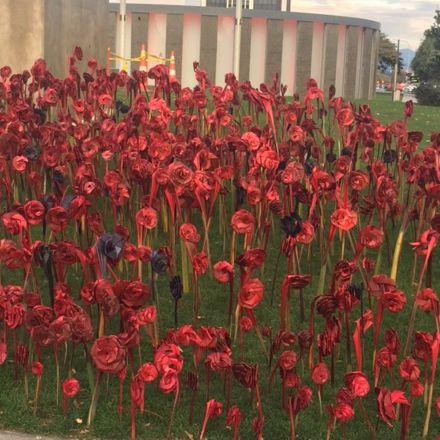 Flax Poppies - ANZAC Day 2016