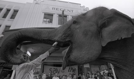 """""""Elephant Weighs in for Regent"""""""
