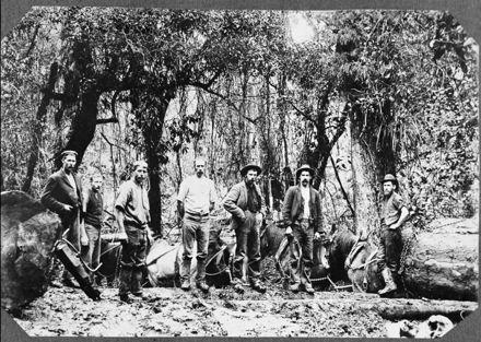 Log-Hauling with Horse Teams, Apiti