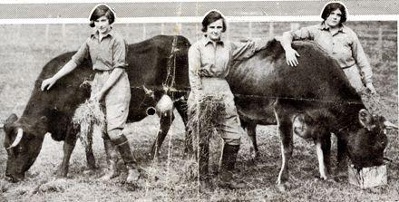 Women feeding cows