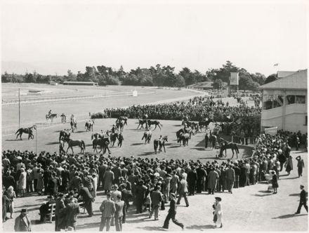Parading of Horses, Awapuni Racecourse