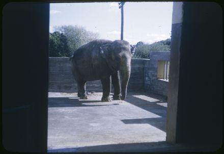 Elephant in Unidentified Location