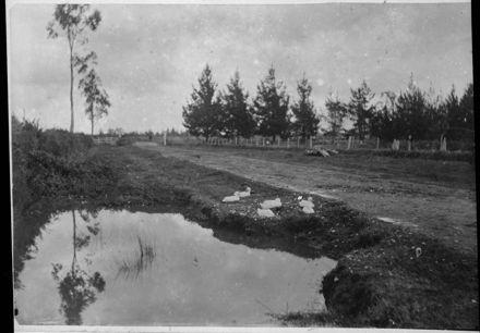 Ducks and roadside pond