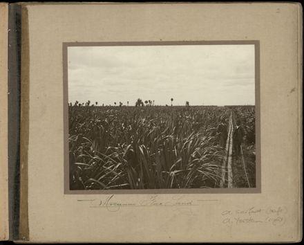 Souvenir of Miranui and Weka Flaxmills Page 5