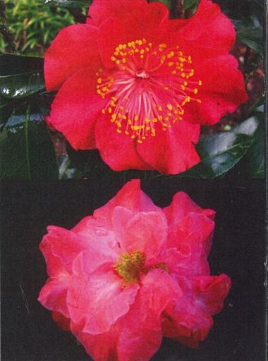 """""""The Camellia Loop Walk at Palmerston North's Victoria Esplanade"""""""