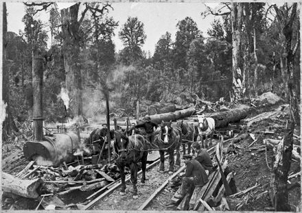 Hauling and Traming Logs to Albert Adsett's Sawmill, King Country