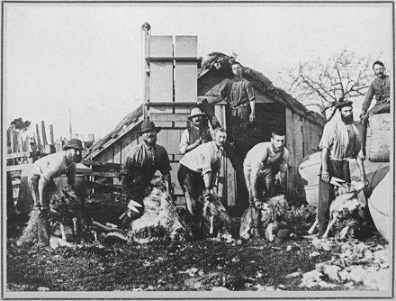 Shearers on Puketotara Estate, near Rangiotu