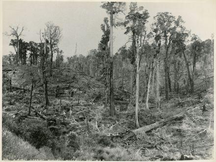Burnt Clearing at Manakau