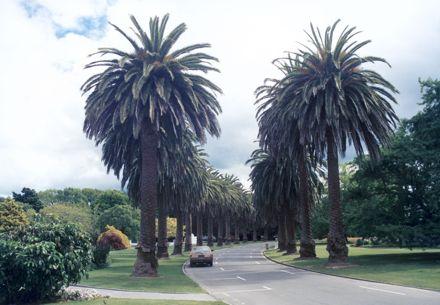 Victoria Esplanade, Palmerston North