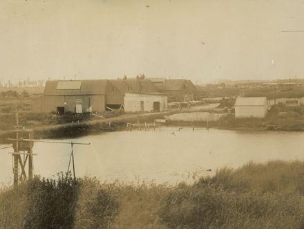 Miranui Flaxmill, near Shannon