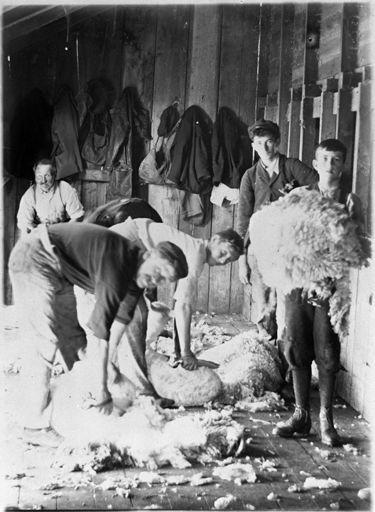 """Shearers at """"Matsubara"""" woolshed, Bunnythorpe"""