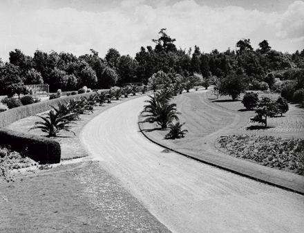 Palm Drive – Victoria Esplanade