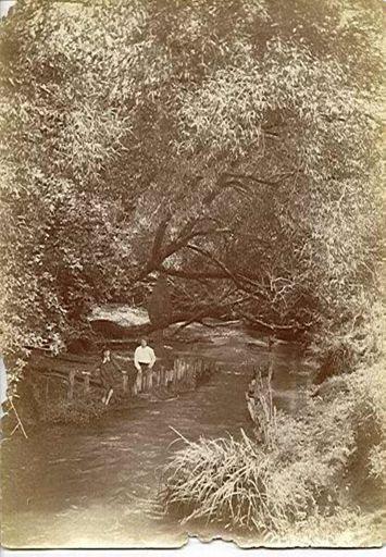 Hokio Stream Eel Weir