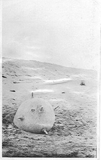 Mine at Hokio Beach 1918