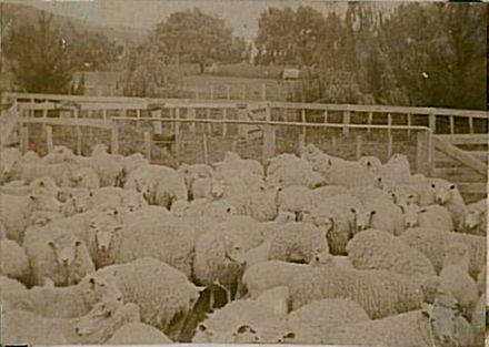 07d Sheep yards looking towards house Denaby